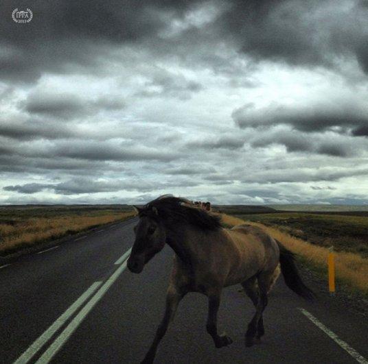Новости в фотографиях - iPhone Photography Awards - 2013 - №3