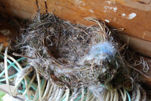 48 Гнездо пустое, улетели все птенцы )