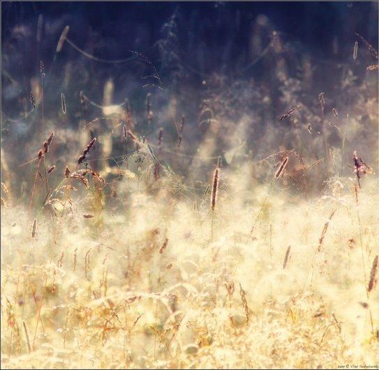 Фото пейзажи как состояние души. Влад Соколовский - №8