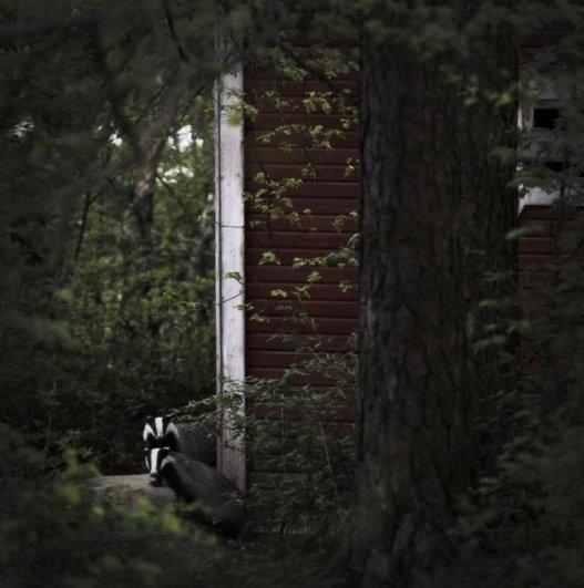 Интересные фото заброшенных лесных домиков - №3
