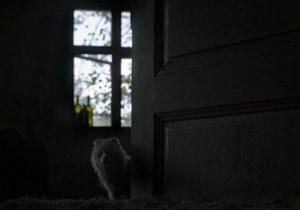 Интересные фото заброшенных лесных домиков - №4