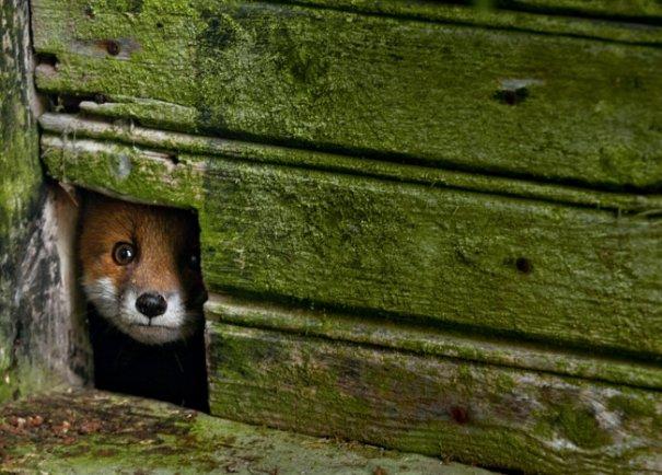 Интересные фото заброшенных лесных домиков - №5