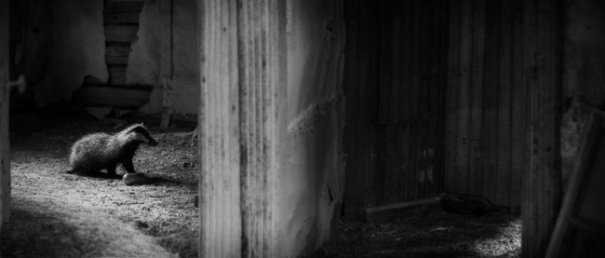 Интересные фото заброшенных лесных домиков - №7