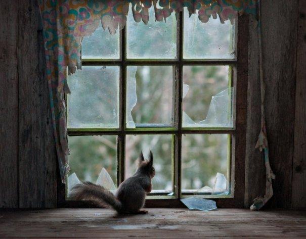 Интересные фото заброшенных лесных домиков - №8