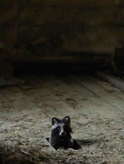 Интересные фото заброшенных лесных домиков - №9