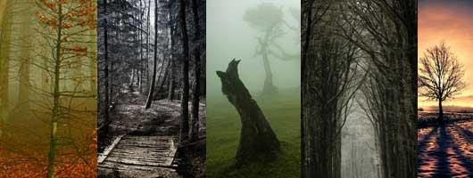 Фото природы - вдохновляющие примеры - №1