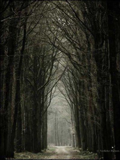 Фото природы - вдохновляющие примеры - №3