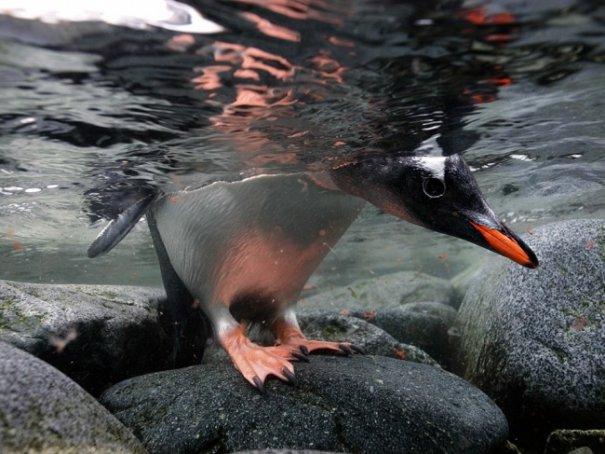 Новости в фотографиях - Лучшие фотографии National Geographic за август - №1