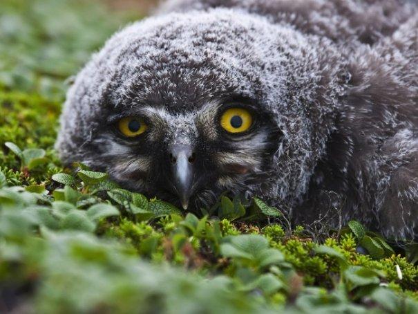 Новости в фотографиях - Лучшие фотографии National Geographic за август - №9