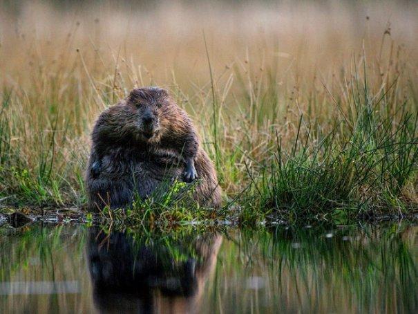 Новости в фотографиях - Лучшие фотографии National Geographic за август - №10