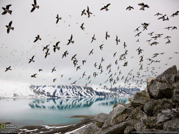 Новости в фотографиях - Лучшие фотографии National Geographic за август - №12