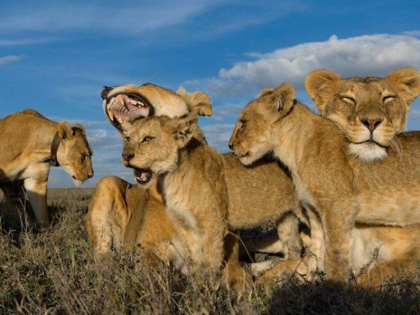 Новости в фотографиях - Лучшие фотографии National Geographic за август - №16