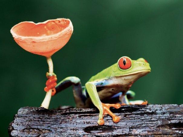 Новости в фотографиях - Лучшие фотографии National Geographic за август - №17
