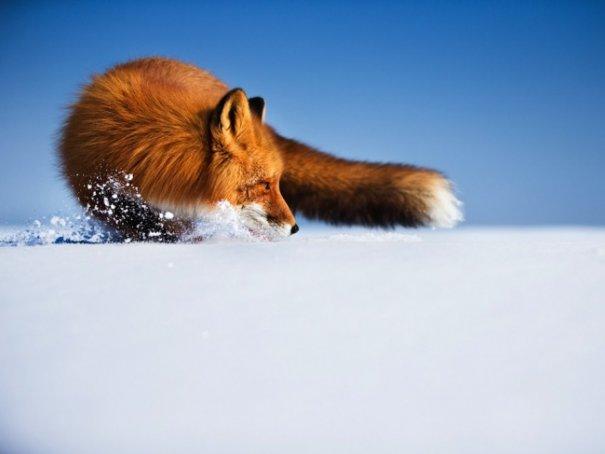 Новости в фотографиях - Лучшие фотографии National Geographic за август - №18