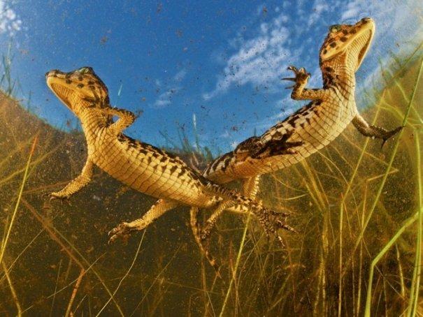 Новости в фотографиях - Лучшие фотографии National Geographic за август - №19