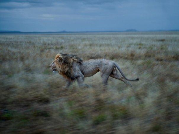 Новости в фотографиях - Лучшие фотографии National Geographic за август - №28
