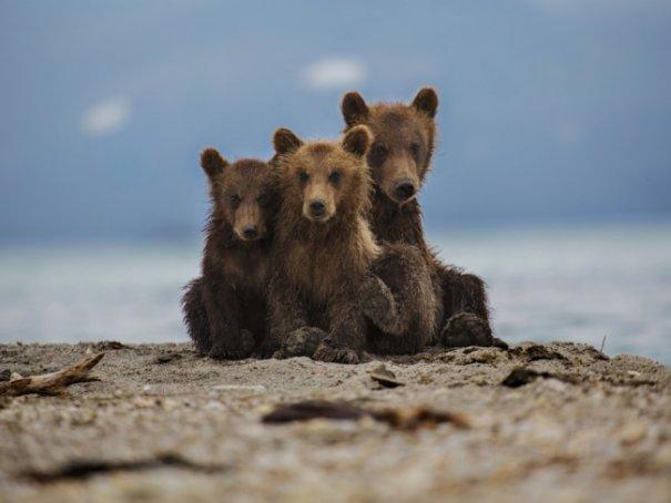 Новости в фотографиях - Лучшие фотографии National Geographic за август - №30