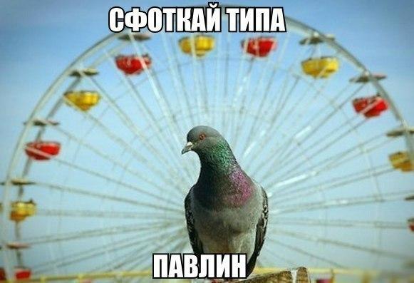 Немного фото юмора! - №4