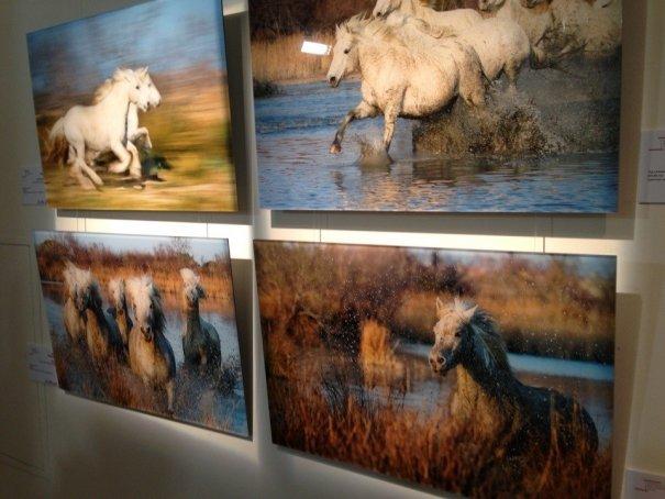 Московский фотографический салон 2013 - №7