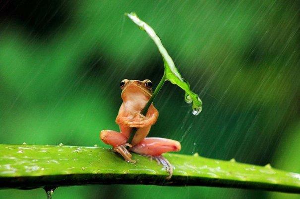 Пенкдикс Пайме – фото лягушек