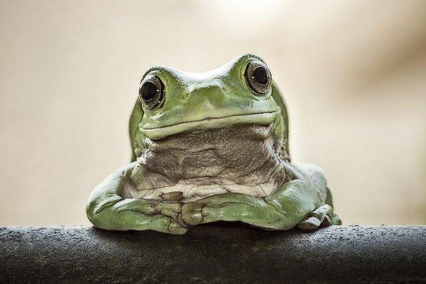 Lessy Sebastian – фото лягушек с ТВ