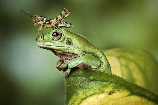 Lessy Sebastian – фото лягушек