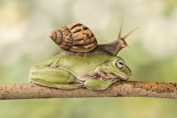 Lessy Sebastian – фото лягушек помогающих