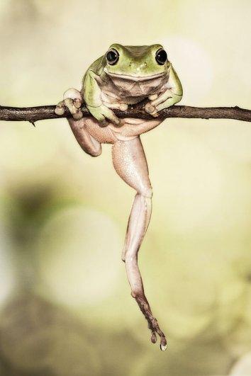 Lessy Sebastian – фото лягушек на зарядке