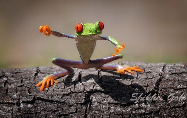 Shikhei Goh – фото лягушек воинов