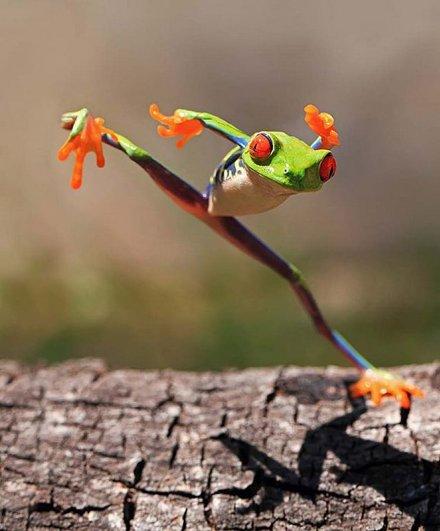 Shikhei Goh – фото красивых лягушек