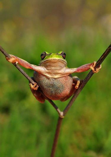 Mustafa Ozturk – фото красивых лягушек