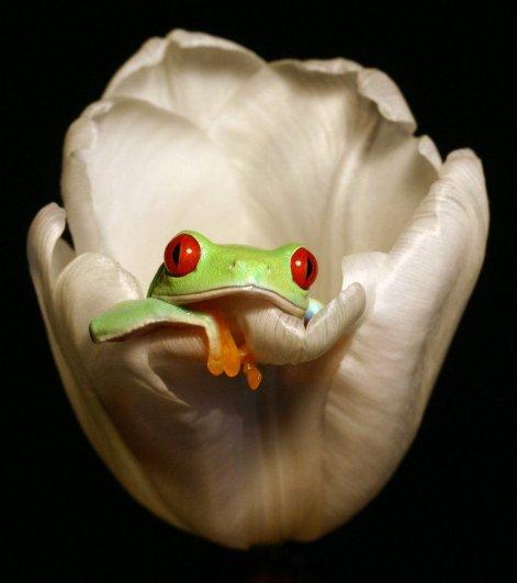 Angi Wallace – фото больших лягушек