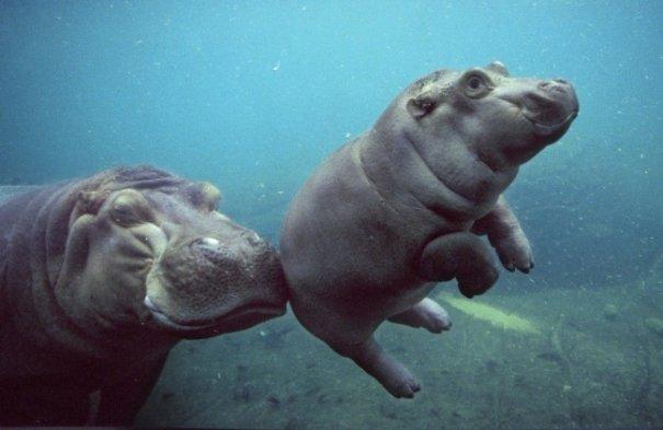 Милые фото животных - №4