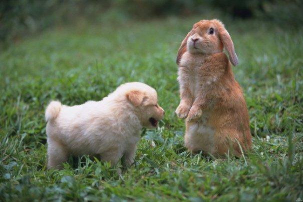 Милые фото животных 9