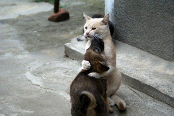 Милые фото животных - №16