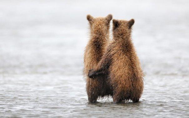 Милые фото животных - №21