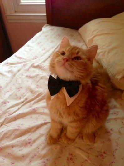 милые котята фото