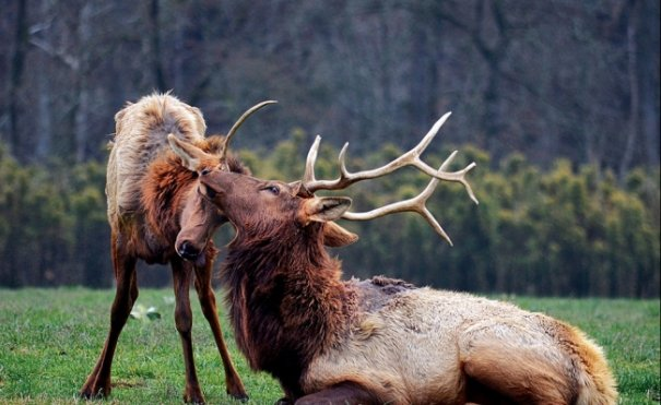 Новости в фотографиях - Лучшее от National Geographic за сентябрь - №2