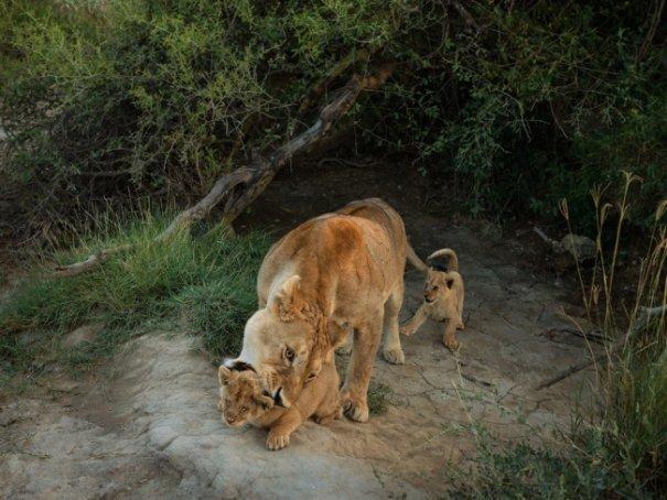 Новости в фотографиях - Лучшее от National Geographic за сентябрь - №10