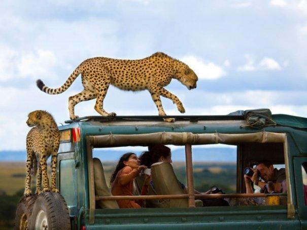 Новости в фотографиях - Лучшее от National Geographic за сентябрь - №14