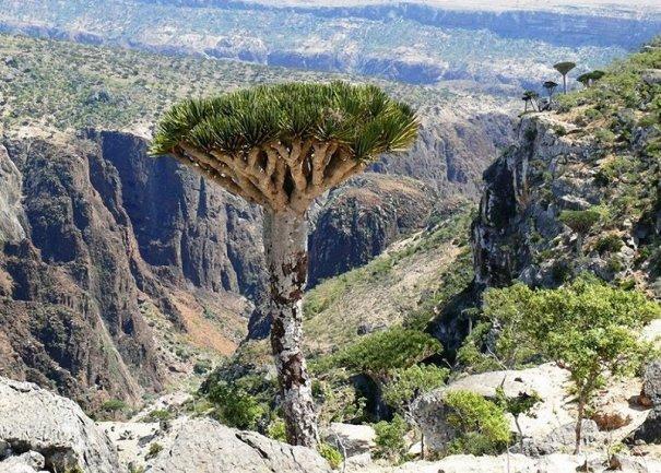 Удивительно красивые фото острова Сокотра - №2