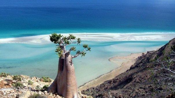 Удивительно красивые фото острова Сокотра - №3