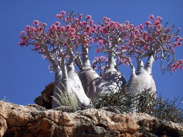 Удивительно красивые фото острова Сокотра - №4