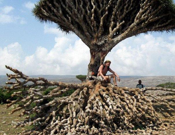 Удивительно красивые фото острова Сокотра - №5