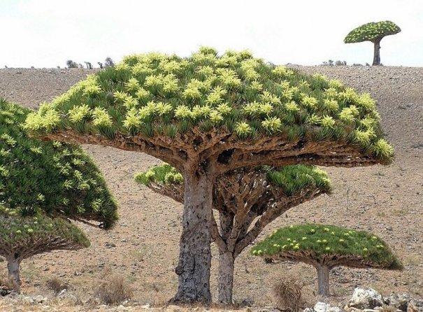 Удивительно красивые фото острова Сокотра - №7