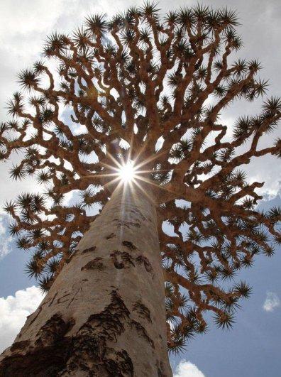 Удивительно красивые фото острова Сокотра - №9
