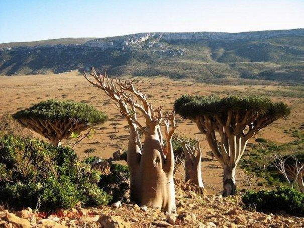 Удивительно красивые фото острова Сокотра - №10