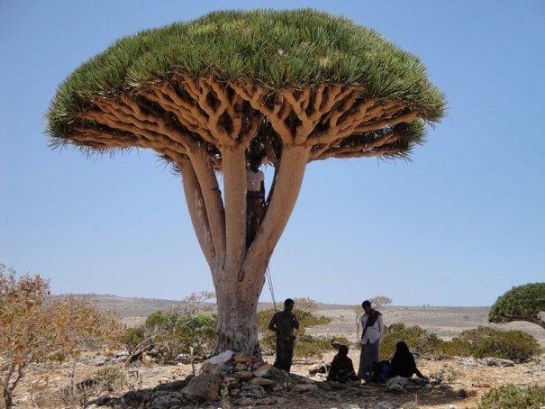 Удивительно красивые фото острова Сокотра - №11