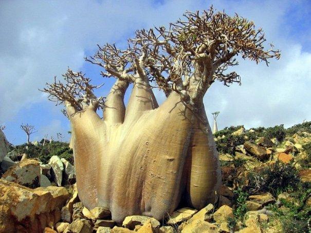Удивительно красивые фото острова Сокотра - №13