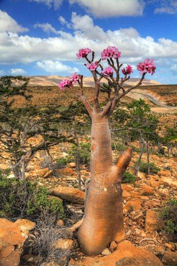 Удивительно красивые фото острова Сокотра - №14